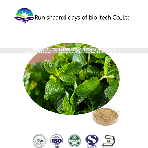 13 Year Specialist Manufacture Best Natural Ocimum sanctum Extract