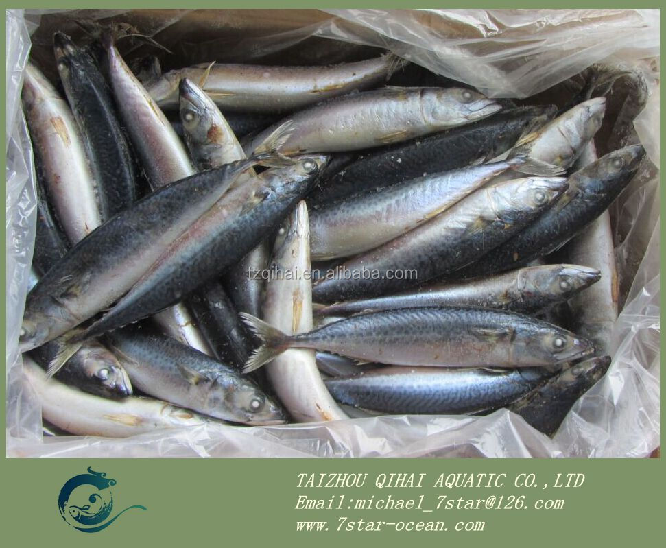 New Landing Pacific Frozen Goods Mackerel Fish Trade 15kg 200-300g/pc