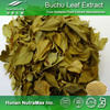 100% Natural Buchu Leaf Extract, Buchu Leaf Extract Powder, Barosma Betulina extract