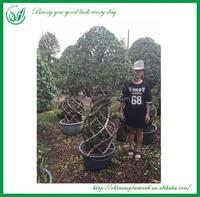 Natural Plant Nursery