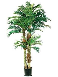 6' Phoenix Palm Tree in Round Pot Green (Pack of 2)