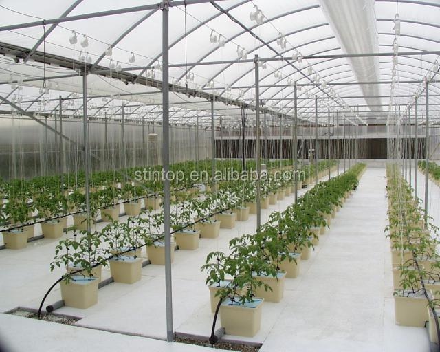 Idroponica pomodori irrigazione a goccia idroponica altre for Irrigazione a goccia per pomodori