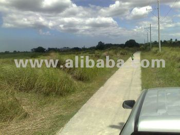 Raw Land At Tanza,Cavite - Buy Raw Lands For Sale Product on Alibaba com