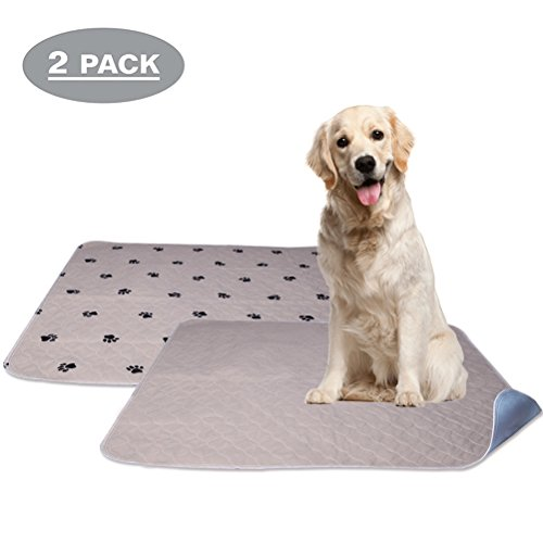 Whole Absorb Reusable Washable Dog
