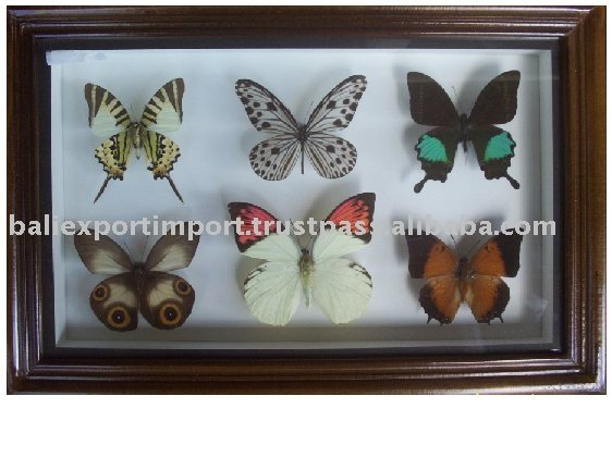 cadre en bois avec r el papillon cadre id de produit 100543004. Black Bedroom Furniture Sets. Home Design Ideas