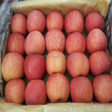 Lower Price Fresh Organic Apples Wholesale Red Fuji apple