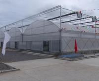 professional float/tempered agricultural glass greenhouse