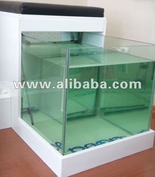 Garra rufa fish pedicure fish spa buy garra rufa fish for Fish pedicure price