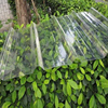 Clear colored polycarbonate corrugated plastic roofing sheets for greenhouse