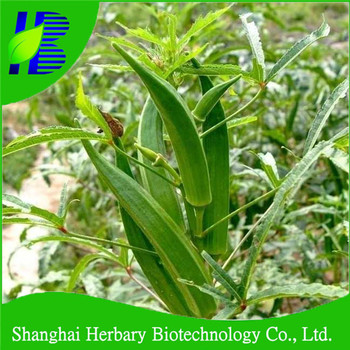 2018 High Quality Vegetable Seeds Lady Finger Seed For