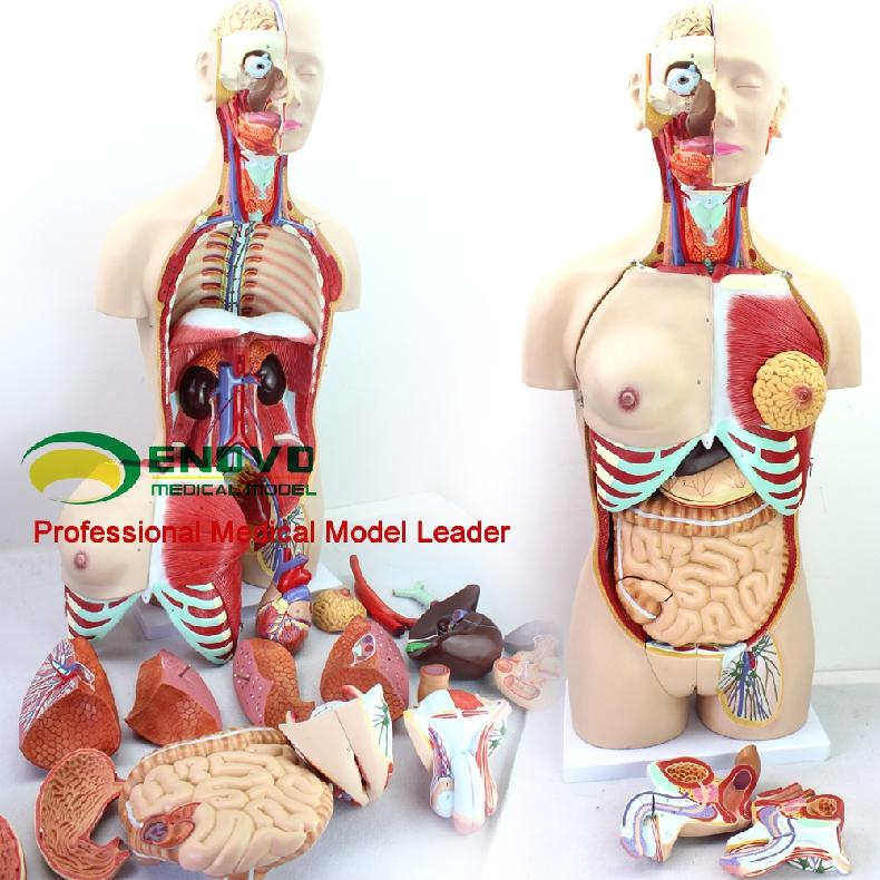 Анатомия в сексе