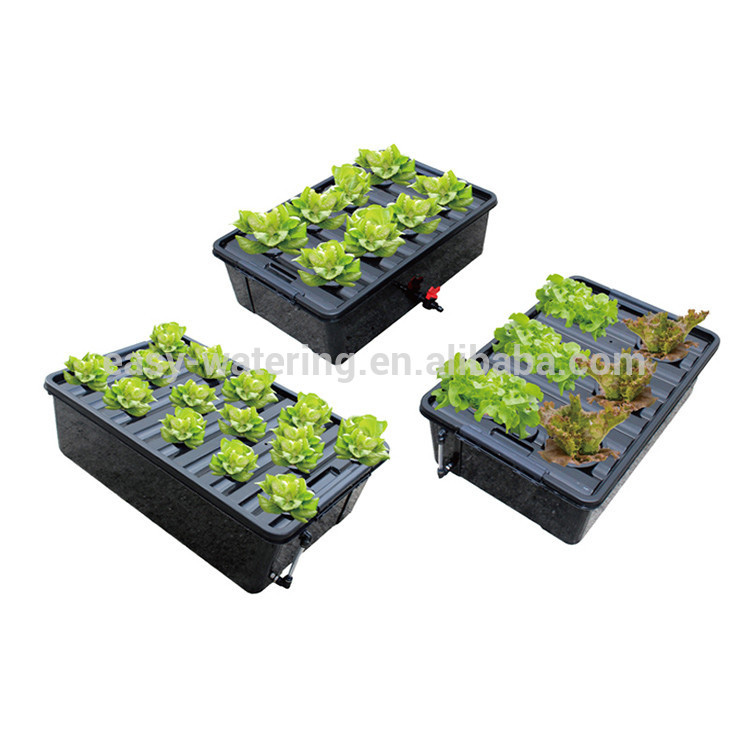 Mini Greenhouse Propagation Seedling Trays Clones Equipment For Sale - Buy  Seedling Trays,Seeding Clones,Seedling Trays For Sale Product on