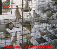 chicken cage quail cage design pigeon coops pigeon breeding cage for sale