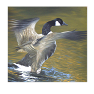 unique stock taken from real DMY art gallery animal paint duck wall art picture oil painting on canvas