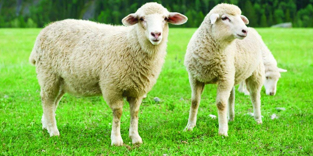 Nature's Seed PB-IWS-2-A 2 Acre Intermountain West Sheep Pasture Blend