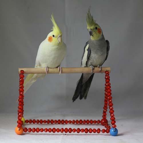 Conure Bird Toys 66
