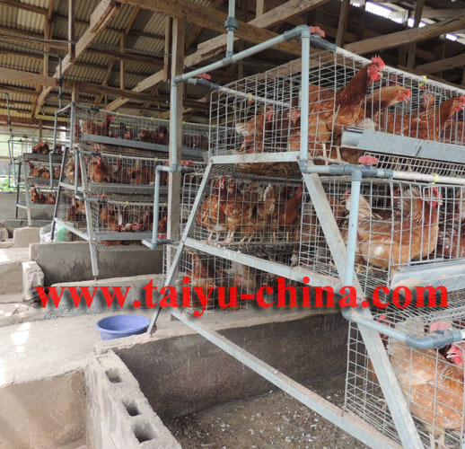 Taiyu Above 95% Egg Production Chicken Battery Cage Design