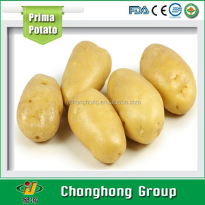 [HOT] fresh potato importers/holland potato price