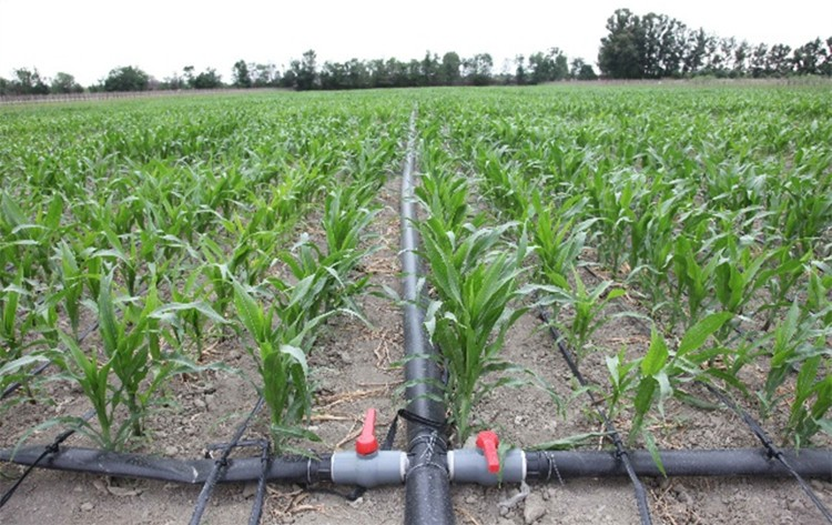 China Large Farmland Drip Irrigation System Design Buy