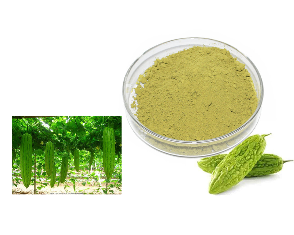 High Quality bitter melon extract charantin powder