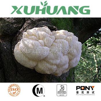 Best selling Lions Mane mushroom hericium erinaceus powder