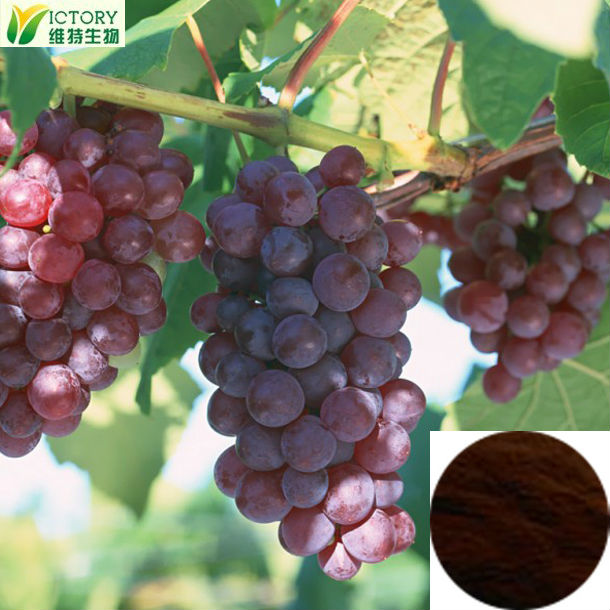 organic grape seed extract with high orac value