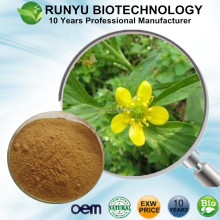 Buy EXW Price free sample organic cat claw extract powder, Ranunculus ternatus Thunb P.E.