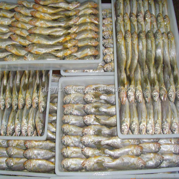 Yellow Croaker Fish With Cheap Price
