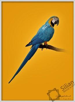 Renkli Papağan Resim Buy Kuş Renkli Resimlerparlak Renkli