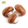Good Quality Frozen Shiitake Mushroom whole