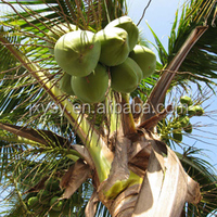 Buy High Quality Organic Virgin coconut oil in China on Alibaba.com