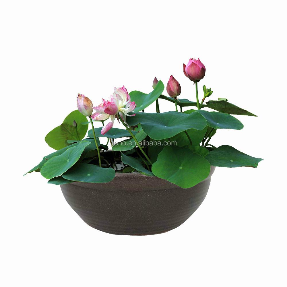 2017 n nuphar lotus en c ramique bocal poissons pour for Bocal a poisson prix