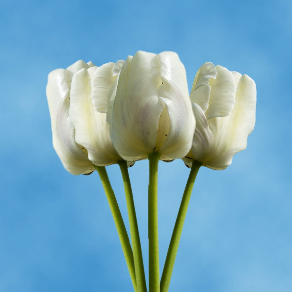 Cheap White Annual Flowers Find White Annual Flowers Deals On Line
