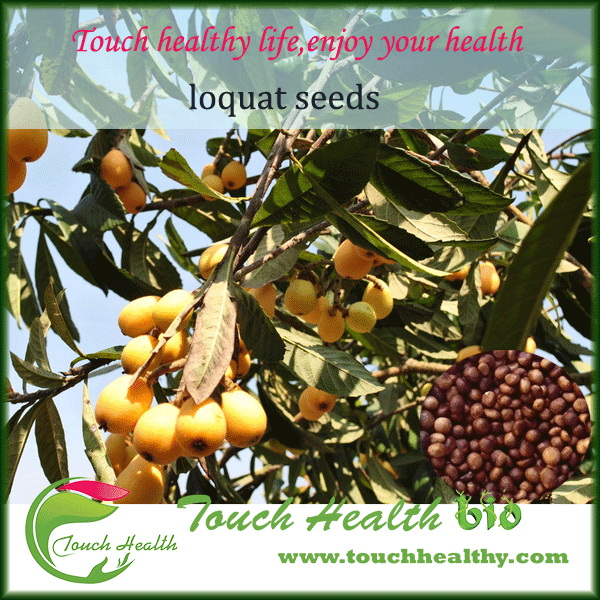 2017 loquat tree seeds accept paypal west union payment