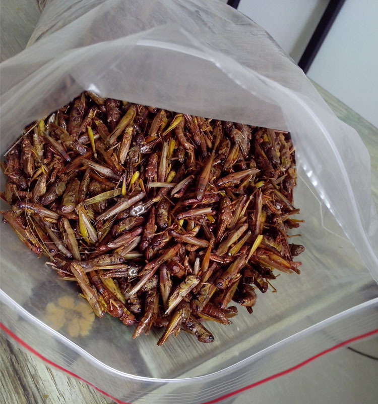 High Quality Dried Grasshopper Edible Grasshoppers Buy