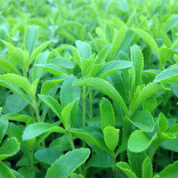2019 F1 Hybrid clean stevia seeds for cultivating