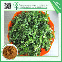 Hot sales product Capillary Wormwood Herb extract powder manufactures
