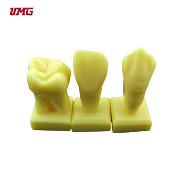 Dental Teeth And Dental Guiding Models Of Tooth Carving - Buy Dental Teeth  Models,Guiding Models,3 Times Guiding Model Of Tooth Carving Product on