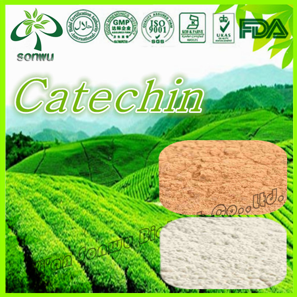 Best price catechin/green tea extract catechins