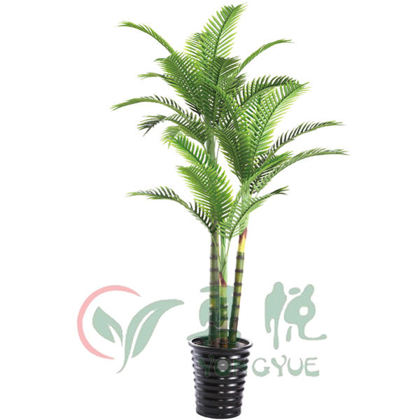 Indoor Palm Trees Sale, Indoor Palm Trees Sale Suppliers and ...