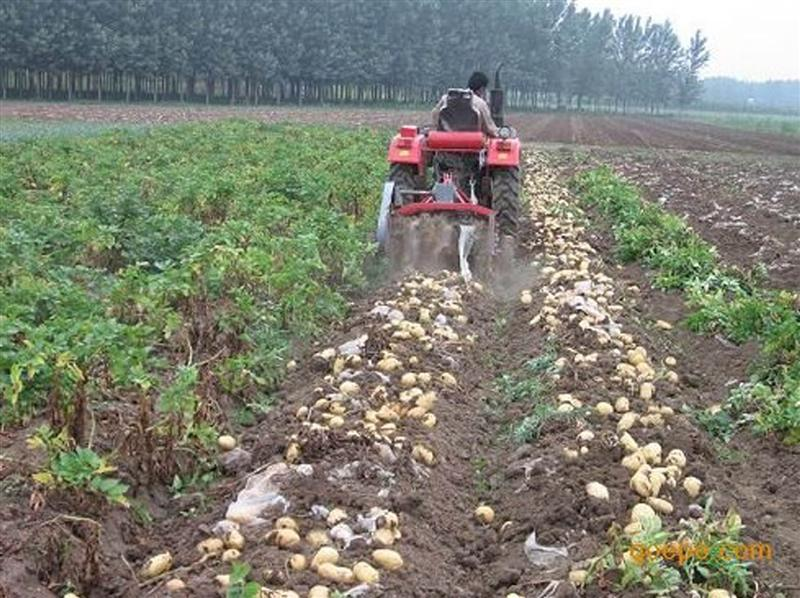 China Suppliers One - Row Potato Digger/ Cassava Harvester