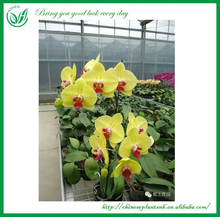Orchids Plant Nursery