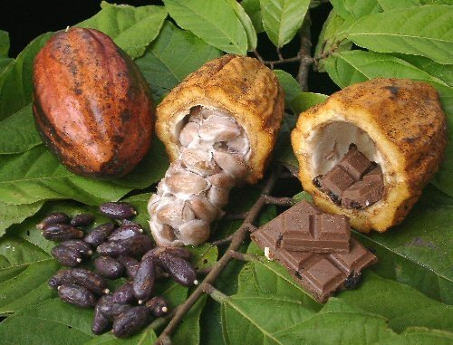 Image result for cacao beans
