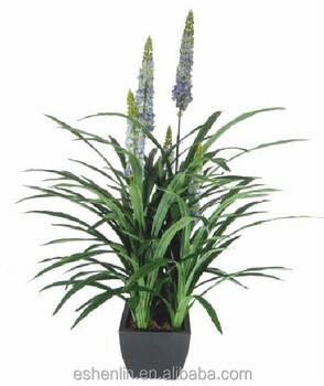 Arten Von Topfpflanzen Slik Blue Orchid Pflanze Mit Blumen Zum Verkauf