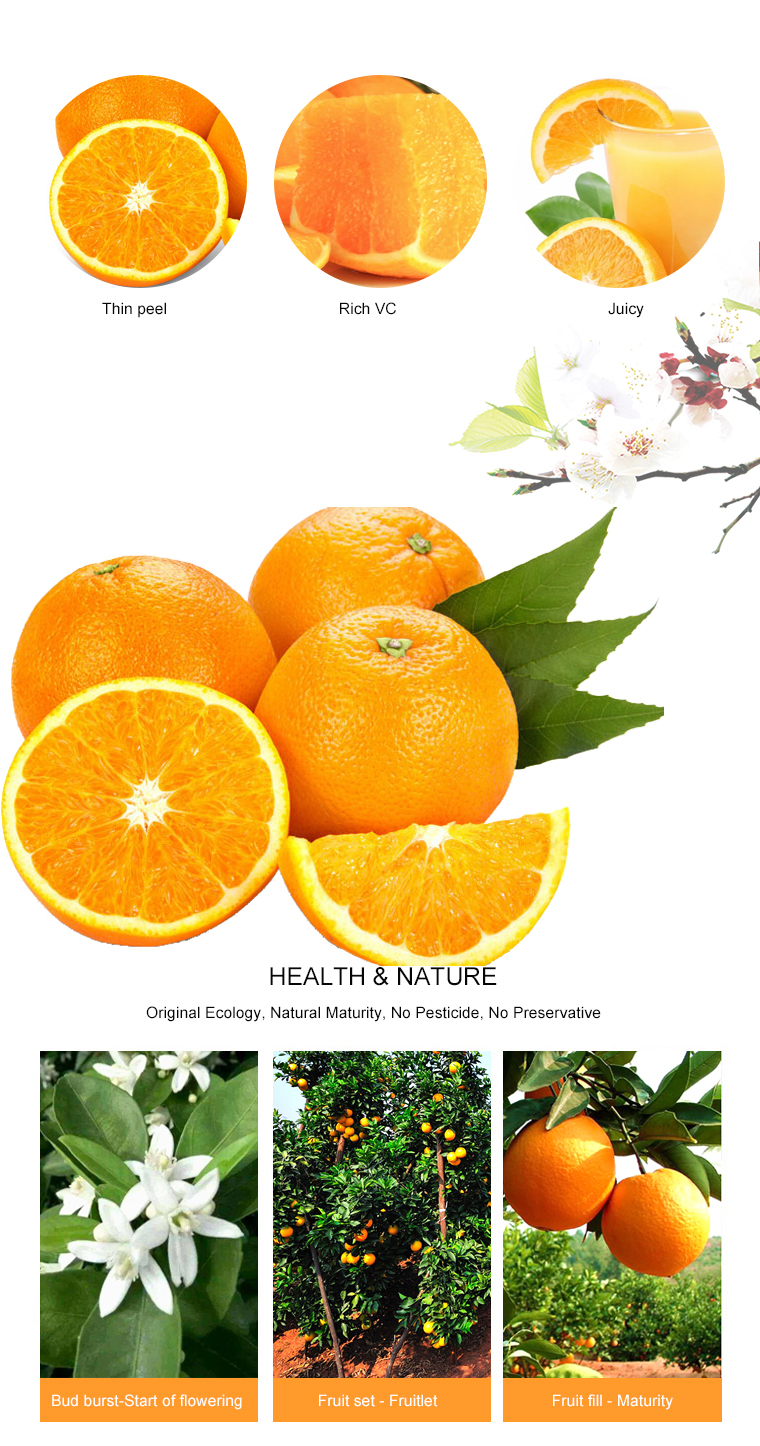 Factory Direct Sale Sweet Delicious Navel Orange