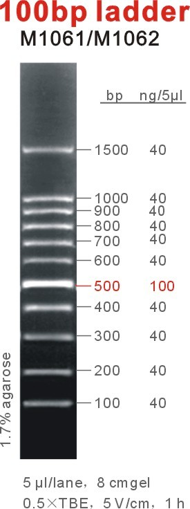 100bp DNA Ladder
