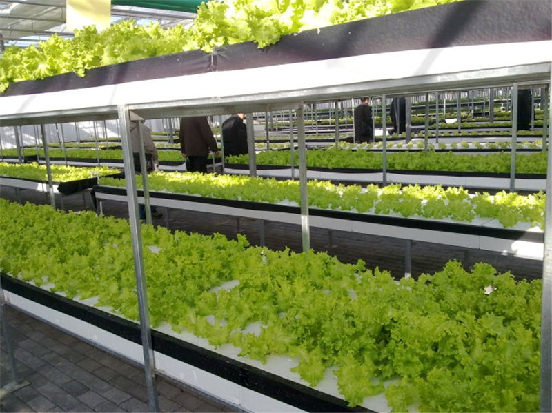 Commercial Nft Hydroponic Gully Systems Buy Nft