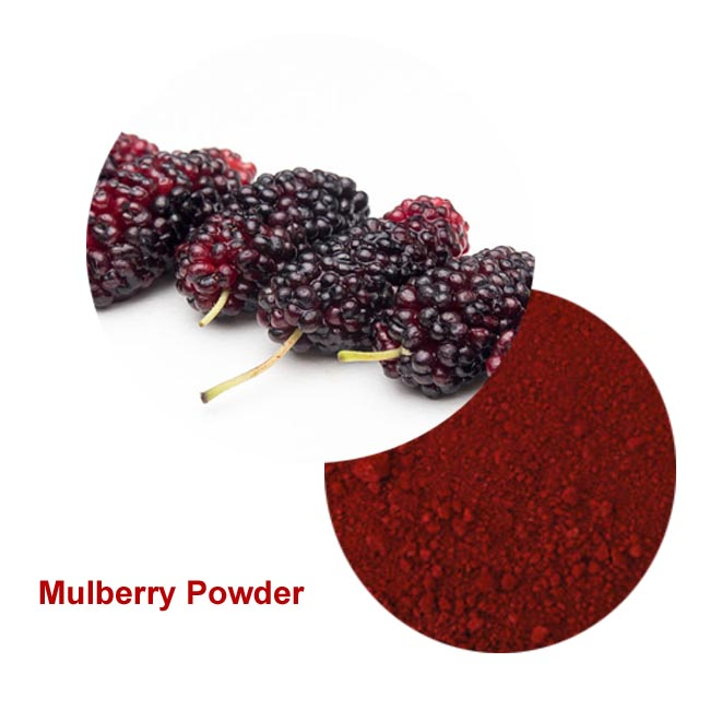 High Quality mulberry powder