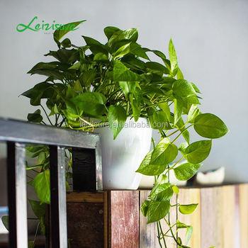 Natal Hidroponik Bulat Berbentuk Mangkuk Bonsai Dalam Ruangan Bunga Buatan Pot Bunga Plastik Buy Natal Hidroponik Bunga Buatan Product On