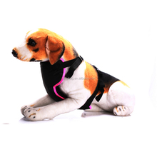 Ningbo Auto Pet Mesh Safety Harness With Car Seat Belt Clip